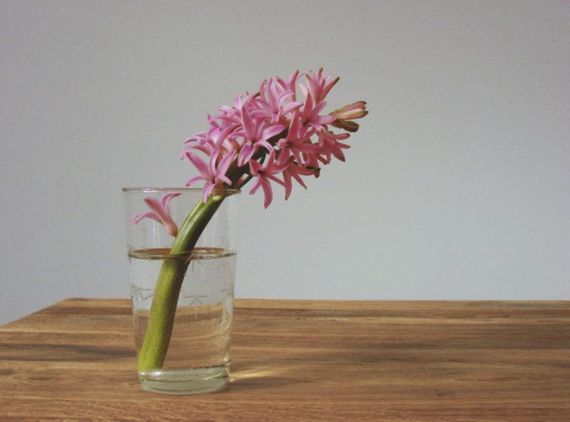 Kwiatek na stole w stylu skandynawskim